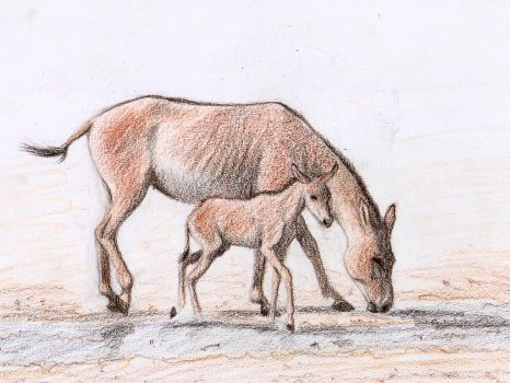 Onager mare and foal by MustangMadness8
