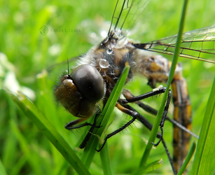 A Dragonfly's Last by Karisa-L-Clark