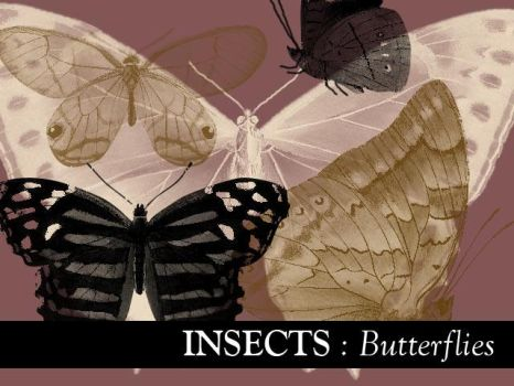 Insects: Butterflies 2 by remittancegirl