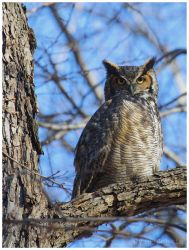 Great Horned Owl by Ryser915