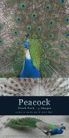 Peacock - Stock Pack by kuschelirmel-stock