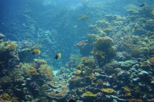 Coral Reef by jeroenpaint