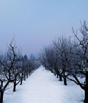 Winter in the orchard II by VesnaRa014