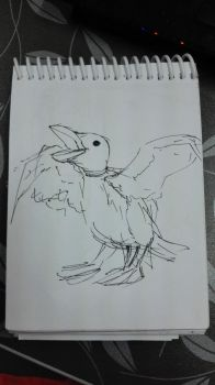 duck by gianaig