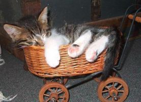 Kitty in a basket by lanephotography