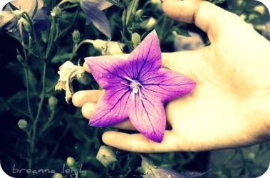 A Little Star-shaped Flower I by blacktotalchaos