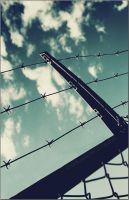 Flies on a wire_ by thephotogenesis