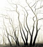 forest veins of life, blacky one by ateist-kleranty