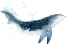 Watercolor Whale by ThreeLeaves