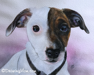 Jack Russell by DrawingMom