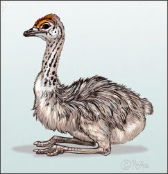 Baby Ostrich by Reptangle
