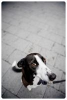 Dog by droolz