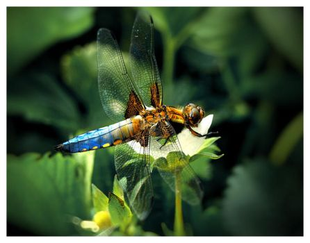 Dragonfly green by titus-fr
