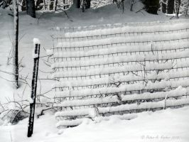 Snow Fenced  by peterkopher