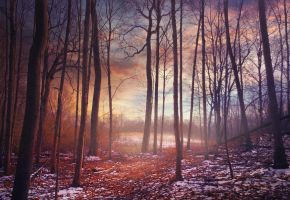 Woods .015 by asetix
