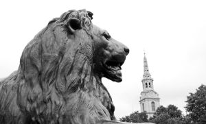 The lion by UdoChristmann