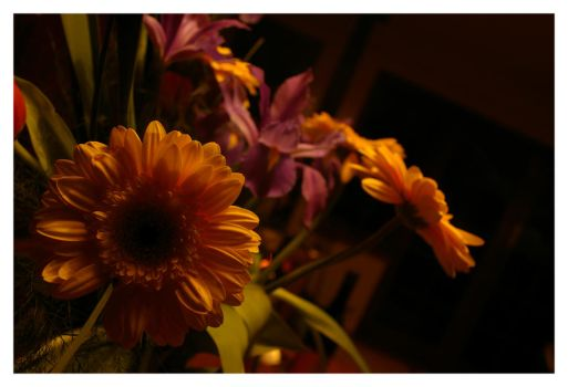 Flowers: 1 by Temmex