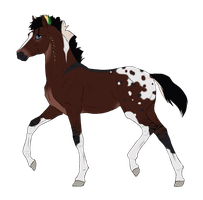 N3305 Padro Foal Design by casinuba