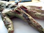 Zombie Hand (close up) by KRSkreations
