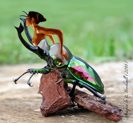 Corset Beetle by Mertail