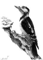 Woodpecker by DochevART