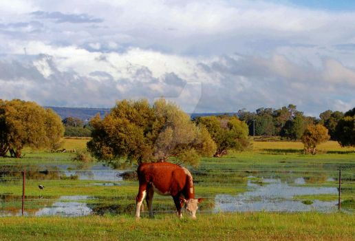 After The Rain by Cairngorm747