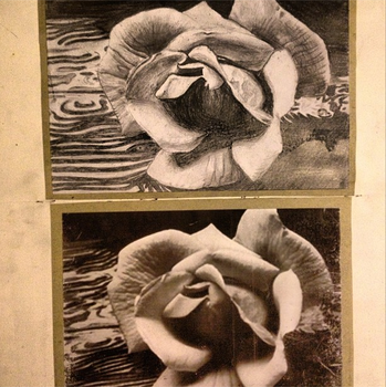 Rose Ansel Adams Drawing by MsTemmii