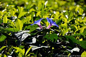 A Shade Of Blue by DavidGrieninger