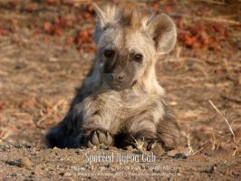 Spotted Hyena Cub by thiefoftime