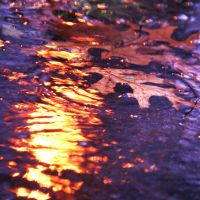 Autumn Puddle by incolor16