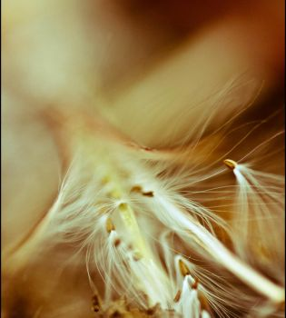 A gentle breeze by pqphotography