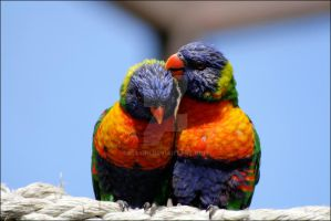 Rainbow Lorikeet 05 by Mayini