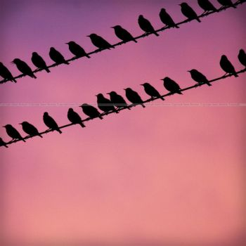 Birds on a Wire by y-me