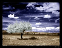 Wind of Change by fatihkilic