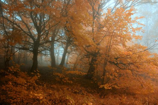 -Transcient beauty of autumn- by Janek-Sedlar