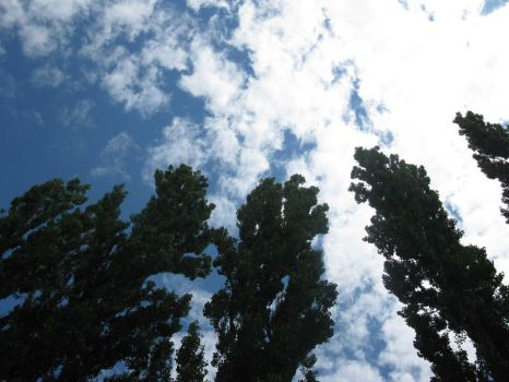 Trees and sky by BlackToucan