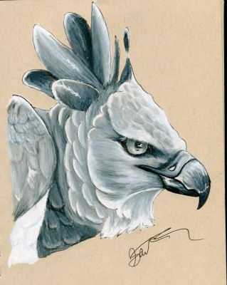 Harpy Eagle by ordinaryredtail