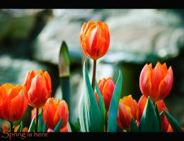 Spring is here by calimer00
