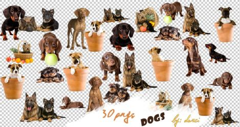 Dog Png Pack by dorina-site