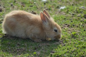 Bunny 1 by decolesse-stock