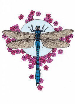 Dragonfly Colored by Maiko-Girl