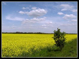 Yellow sea by DrDra by Ro-nature