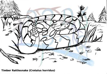 Crotalus horridus by MountainLygon