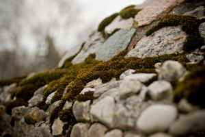 A Rolling Stone Gathers no Moss by robertllynch