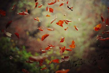 Autum / Jesen by Natalyy