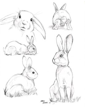 Rabbit study sketches 01 by Baron-Engel