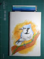 Blue Jay by affannitihardjo