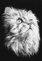 ACEO - Long haired Cat by StressyBessy