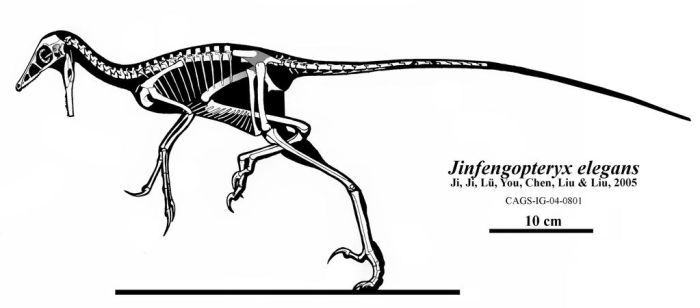 The Golden Phoenix by Qilong