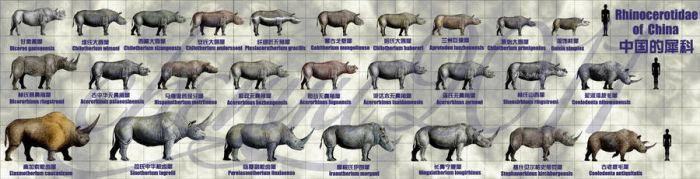 Rhinocerotidae of China by sinammonite